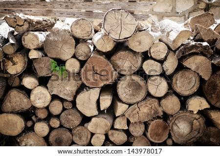fire wood, log, billet - stock photo