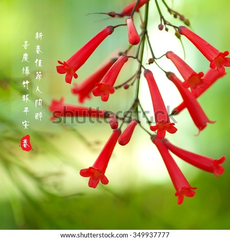 Firecracker flowers for 2016 lunar new year / chinese new year card design. The couplet means springtime brings happiness, firecrackers announce good news. - stock photo