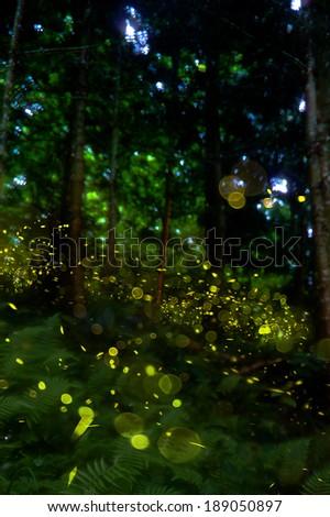 firefly - stock photo
