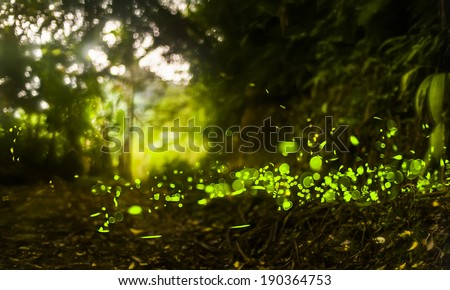 fireflys - stock photo