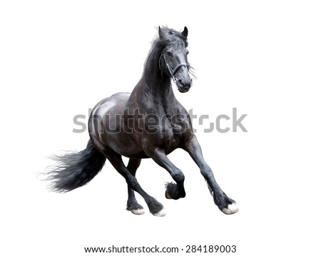 firesian horse running isolated on white - stock photo