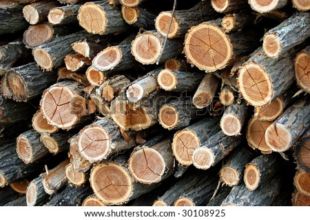 Firewood stack ready to be burnt in winter - stock photo