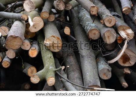 Firewood texture - stock photo
