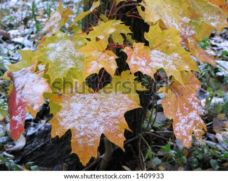 First autumn snow - stock photo