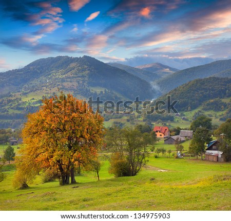 First autumn yellow trees in the mountain village - stock photo