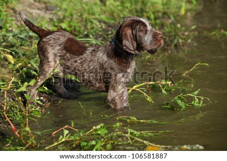 First bathe for puppy - stock photo