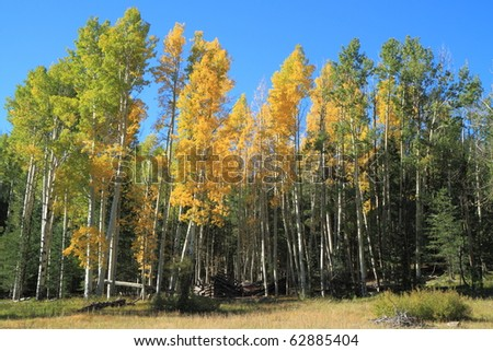 first fall colors near Flagstaff - stock photo