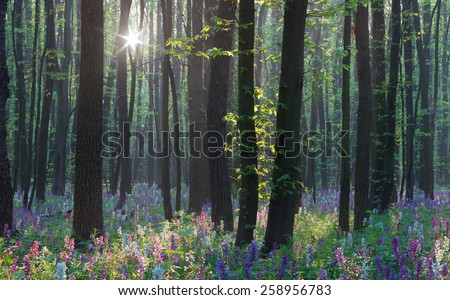 First flowers in the forest. Spring landscape. Sunny day - stock photo