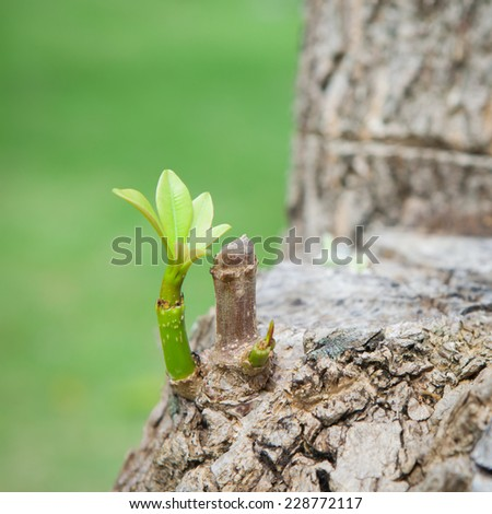 First leaf of tree - stock photo