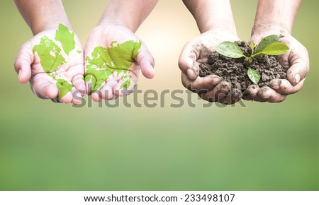 First, painted green world map on hands. Second,hands holding a young plant. Ecology concept. - stock photo