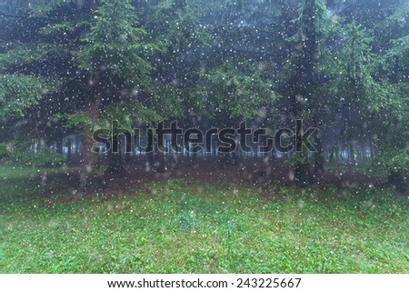 First snow flakes against the evergreen forest trees - stock photo