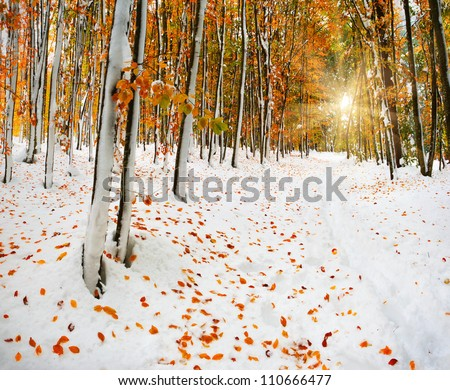 First snow in the forest - stock photo