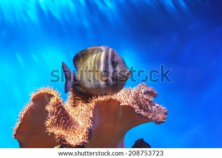 Fish and coral - stock photo