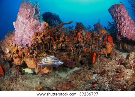 fish and reef - stock photo