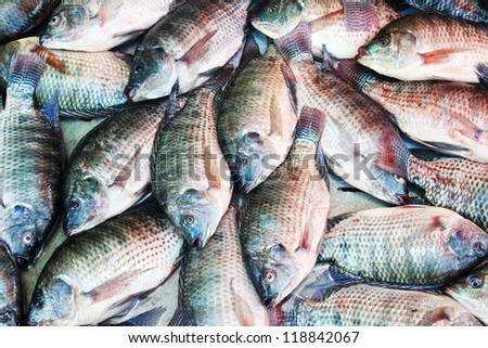 fish background, Tilapia - stock photo