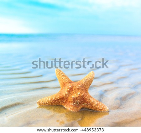 Fish Beach Star  - stock photo