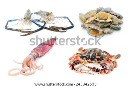 fish collection isolated on the white background - stock photo