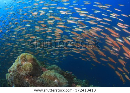 Fish coral reef sea ocean underwater - stock photo
