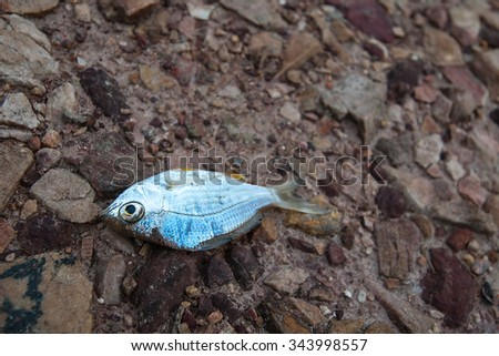 fish died on rock ground cracked earth / drought / river dried up /famine / scarcity / global warming / natural destruction / extinction - stock photo