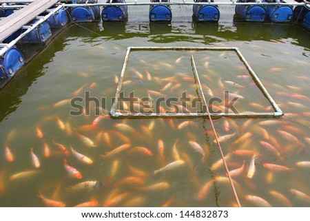 Fish farm located in thai country - stock photo