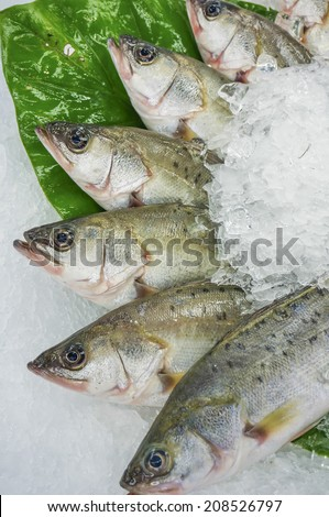 Threadfin bream stock photos images pictures for Stock fish for sale