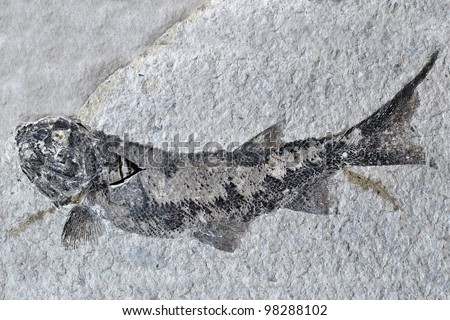 Fish fossil - stock photo
