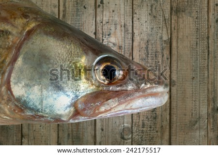 fish head wood background isolated clipping path - stock photo
