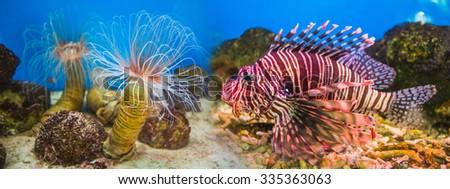 Fish in an aquarium in the National Oceanographic Museum of Vietnam.  Nha Trang - stock photo