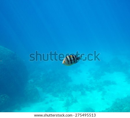Fish in deep of the sea - stock photo