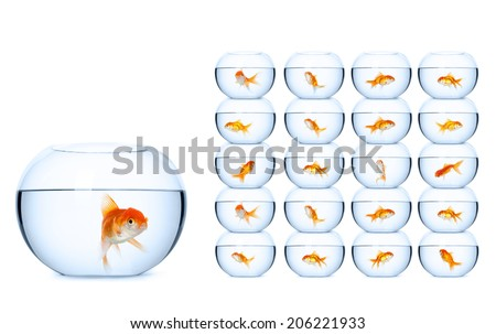 Fish in fishbowls, isolated on white background. Concept of self-management business - stock photo