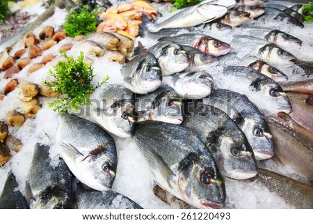Fish in ice | market | seabass | dorado  - stock photo