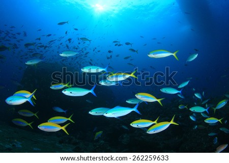 Fish in Sea - stock photo