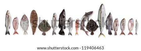 Fish in stock - stock photo