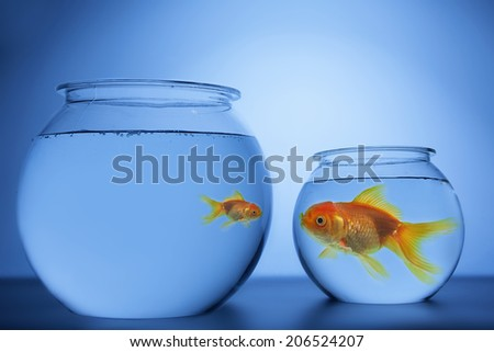 Fish in the Bowl - stock photo