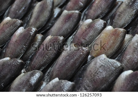 Fish leaves - stock photo