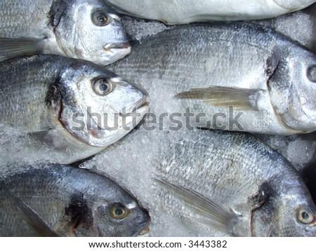Fish market. - stock photo