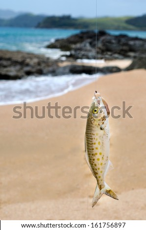 Fish on a hook during casting fishing at sea from the beach. Concept photo of fish on a hook: trapped,trap,victim ,fishing ,sport, angling, hunt and hunting and hunter,  - stock photo