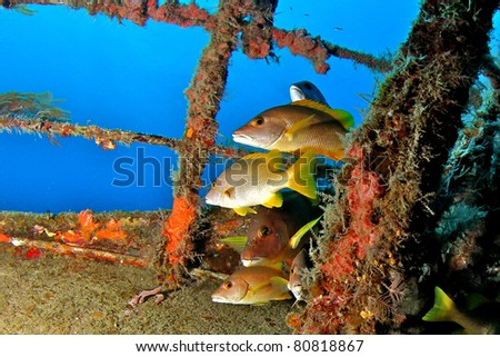 Fish on a Shipwreck in the Bahamas - stock photo