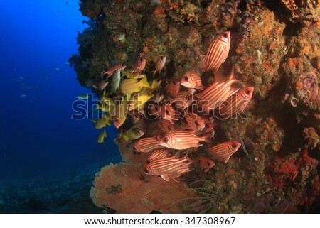 Fish on coral reef: Squirrelfish and Snappers - stock photo