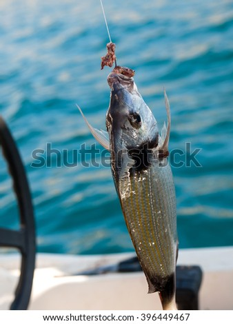 fish on the hook with bait - stock photo