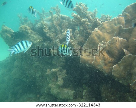 Fish swimming near coral reef under the sea                                         - stock photo