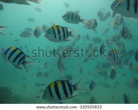 Fish swimming under the sea                                      - stock photo