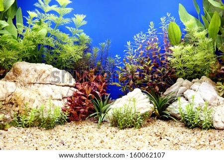 Fish tank decorative - stock photo