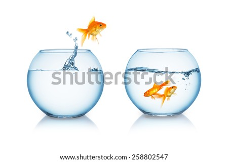fishbowl with a jumping goldfish on white background - stock photo