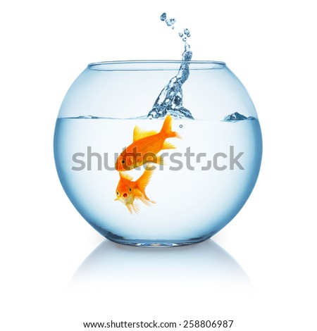 fishbowl with a two goldfishes and a jumping splash - stock photo