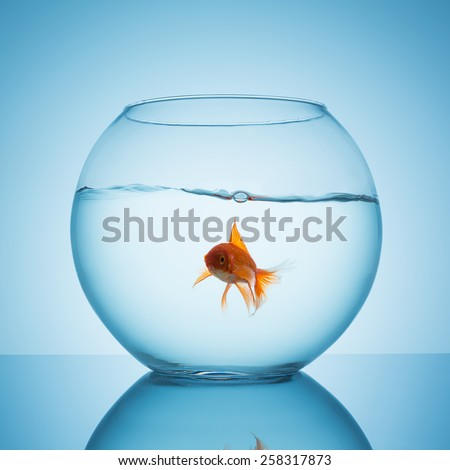 fishbowl with wavy water surface and a curious looking goldfish  - stock photo