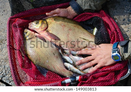 Fisherman holding a red fishing net with breams - stock photo