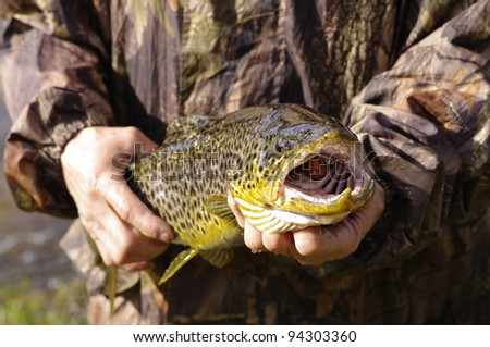 Fisherman holding a salmon trout fish - stock photo