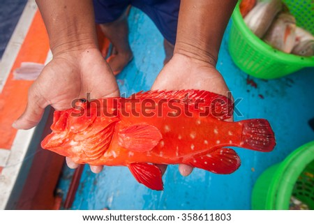 fisherman holding red grouper fish on the fishing boat - stock photo