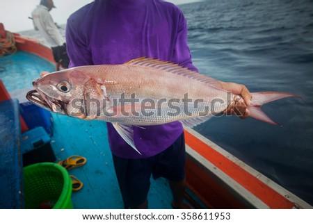 fisherman holding Rusty jobfish on the fishing boat - stock photo
